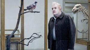 piccione1